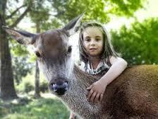 biche Règlement intérieur pour les animaux de compagnie