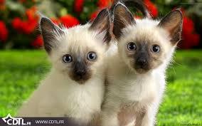 chats Règlement intérieur pour les animaux de compagnie
