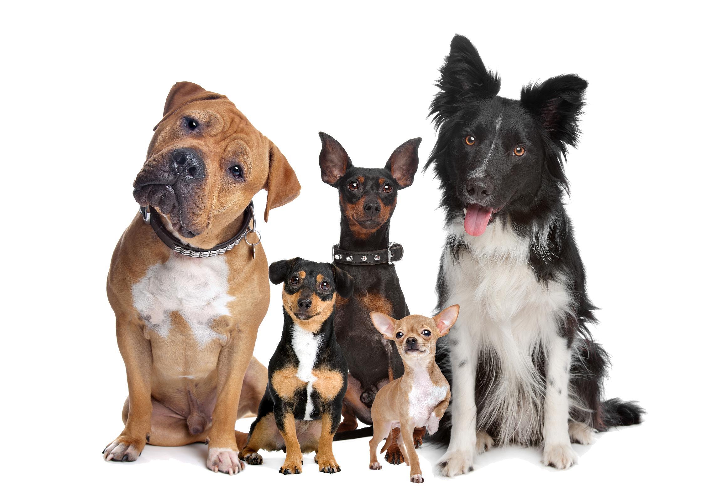 toutous Règlement intérieur pour les animaux de compagnie